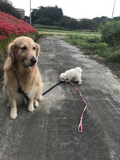 初めての散歩