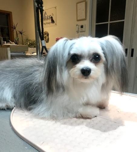 MIX犬のチョコちゃん♡