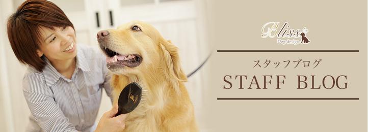 ドッグデザインブリス - 三重県亀山市・鈴鹿市の愛犬に寄り添ったプライベートサロン